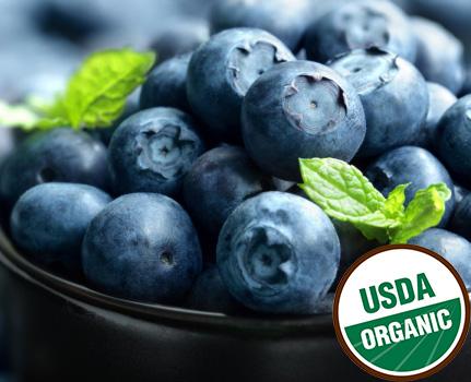 Việt Quất Organic Mỹ